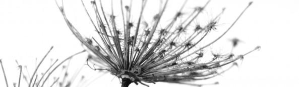 cropped-visne-blomster-sort-hvit.jpg